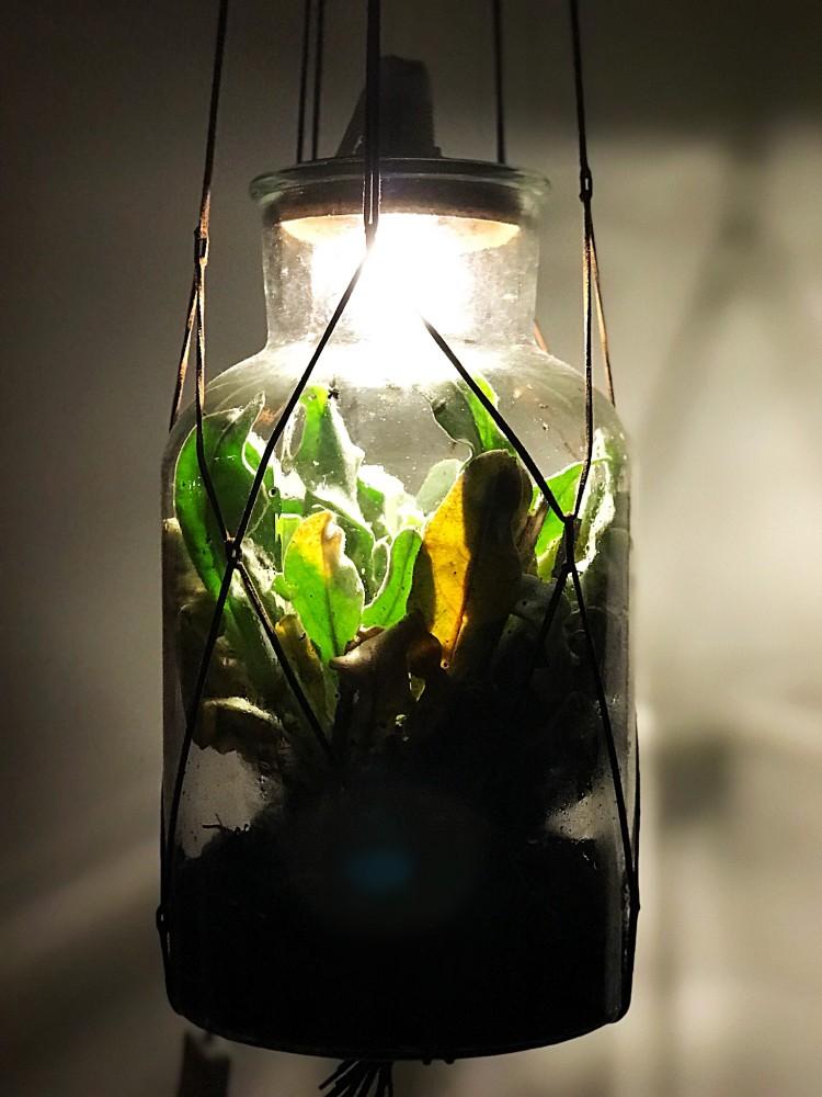 DIY het mini-planten ecosysteem