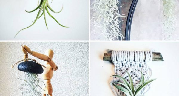 lucht plantenverzorgen thuis