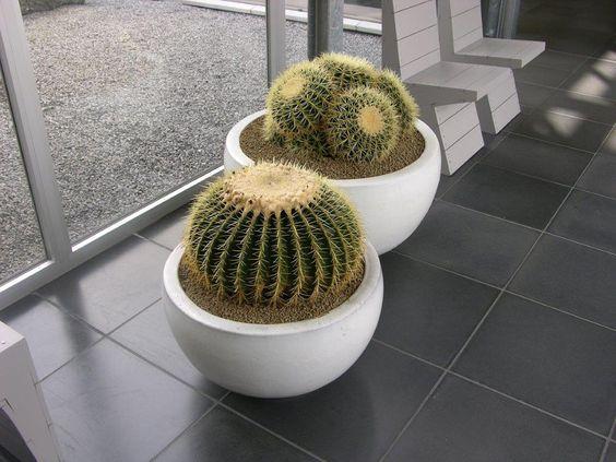 sterke planten