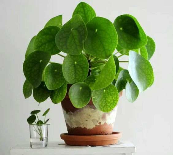 sterke planten blog