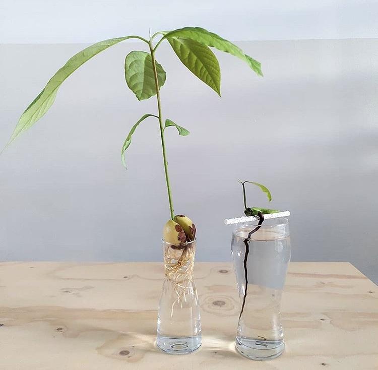 Hou je van planten stekken