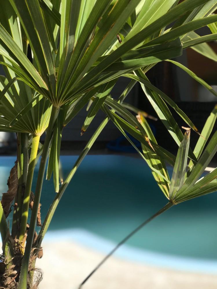 een zwembad in de tuin met palm