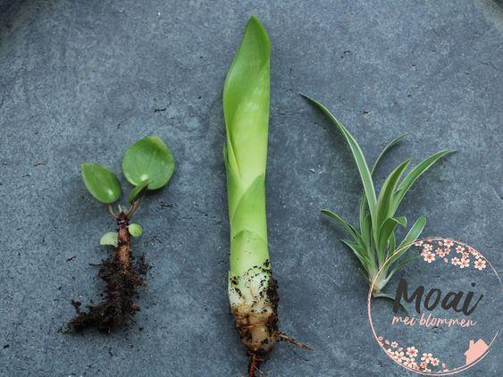 hoe stek je een plant
