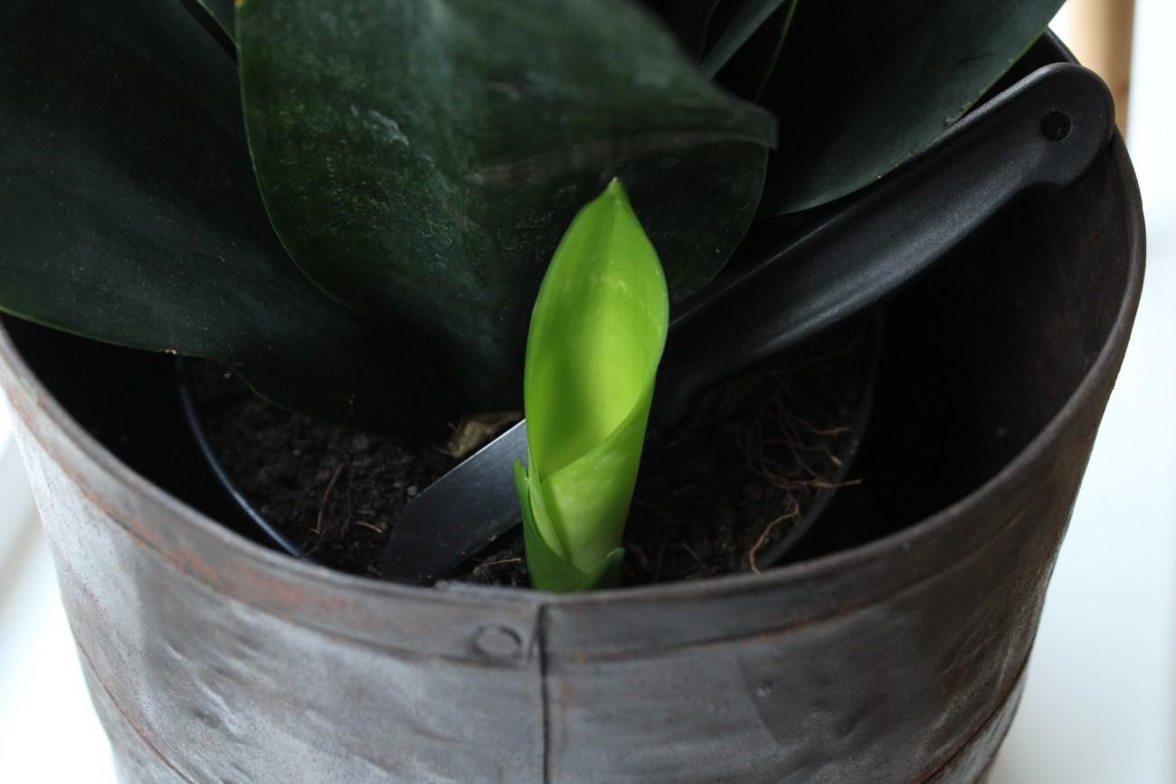 plantenblog