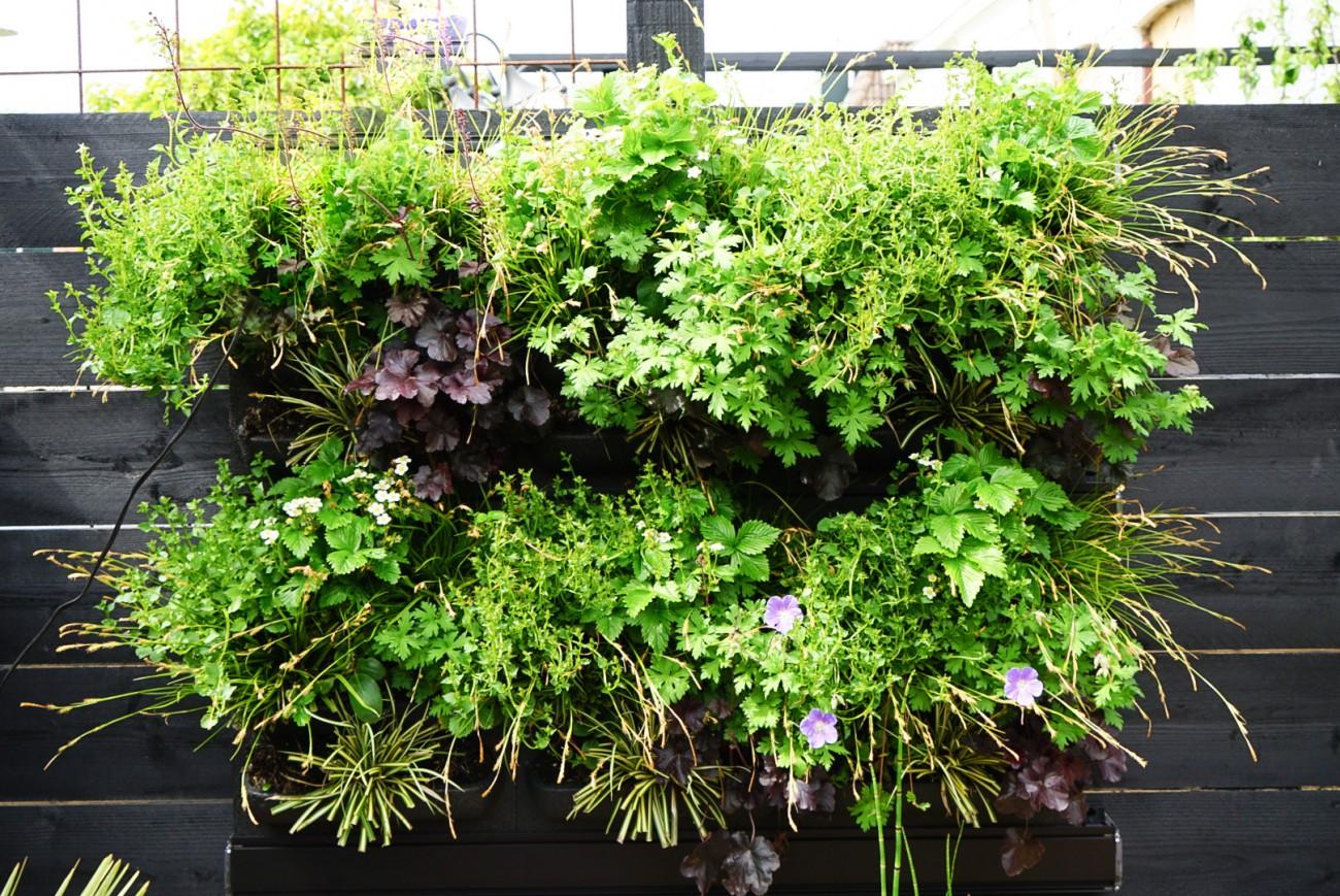 een urban jungle planten wand