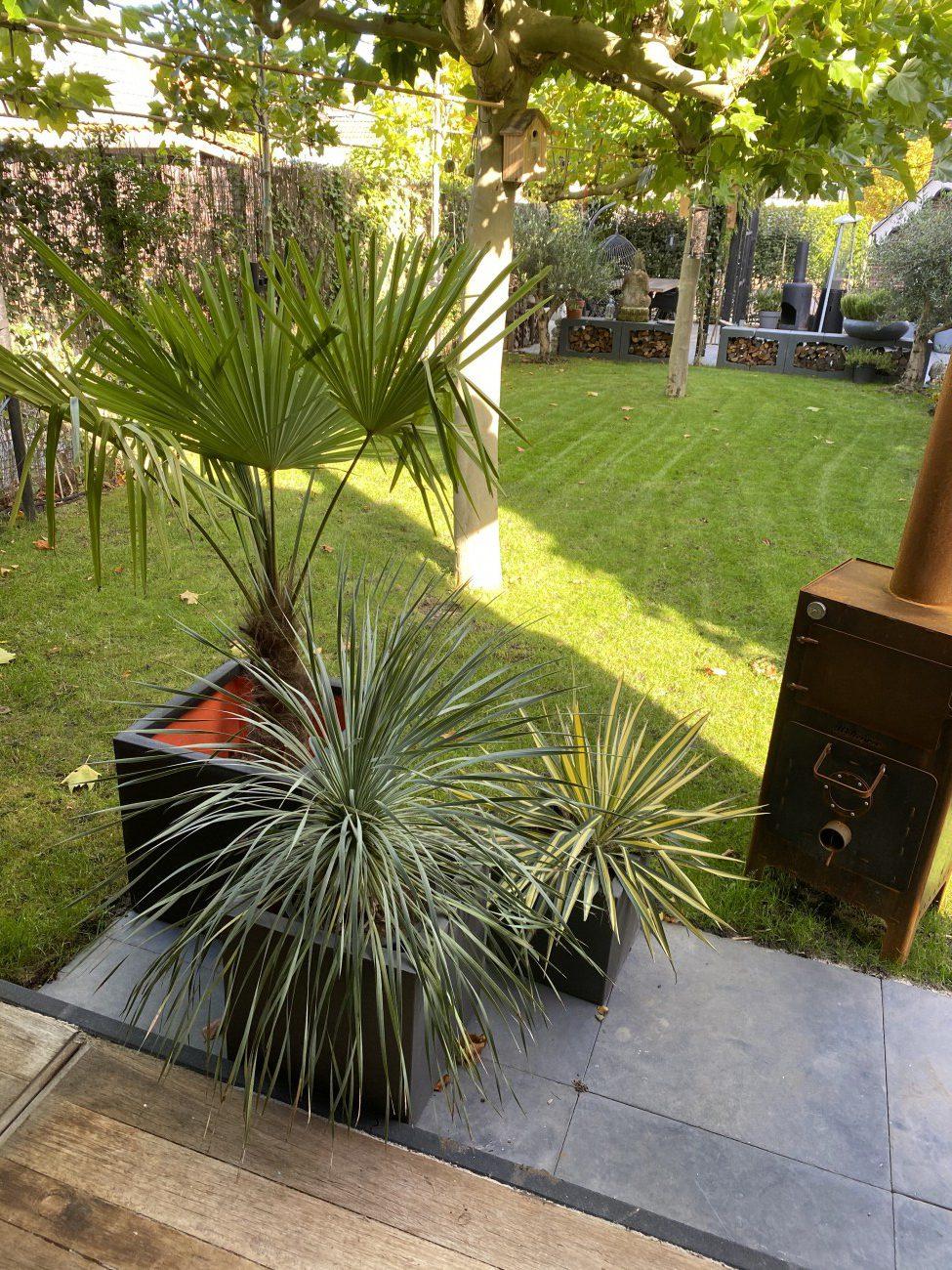 Planten voor in de tuin