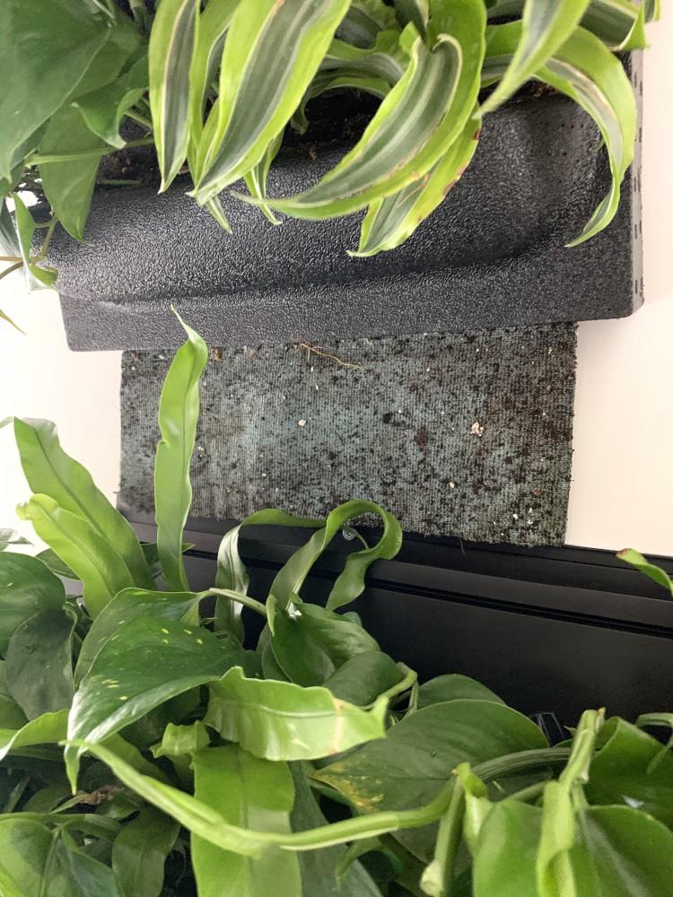 blog plantenwand