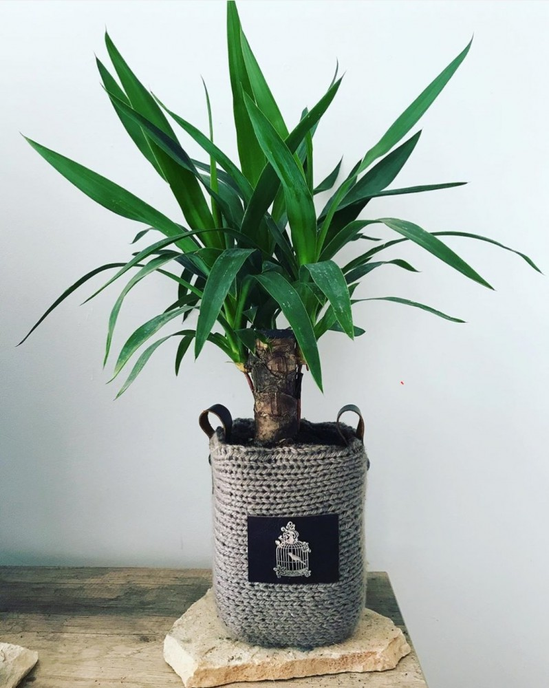 spread your plant collection