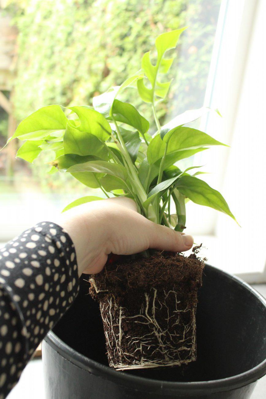 Hoe zet je een plant op water blog