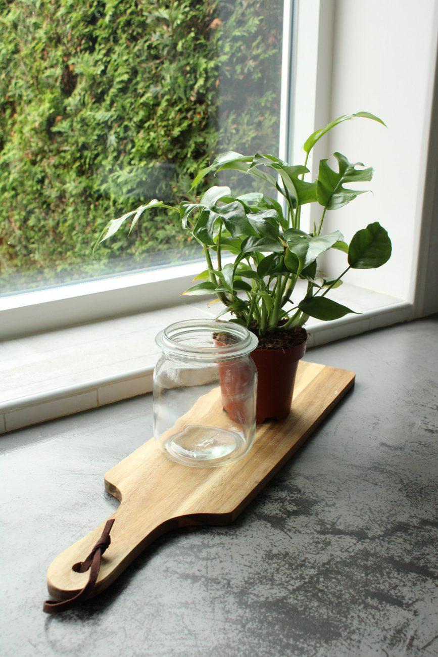 Hoe zet je een plant op water?