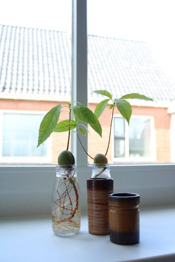 Plantentrends najaar 2020