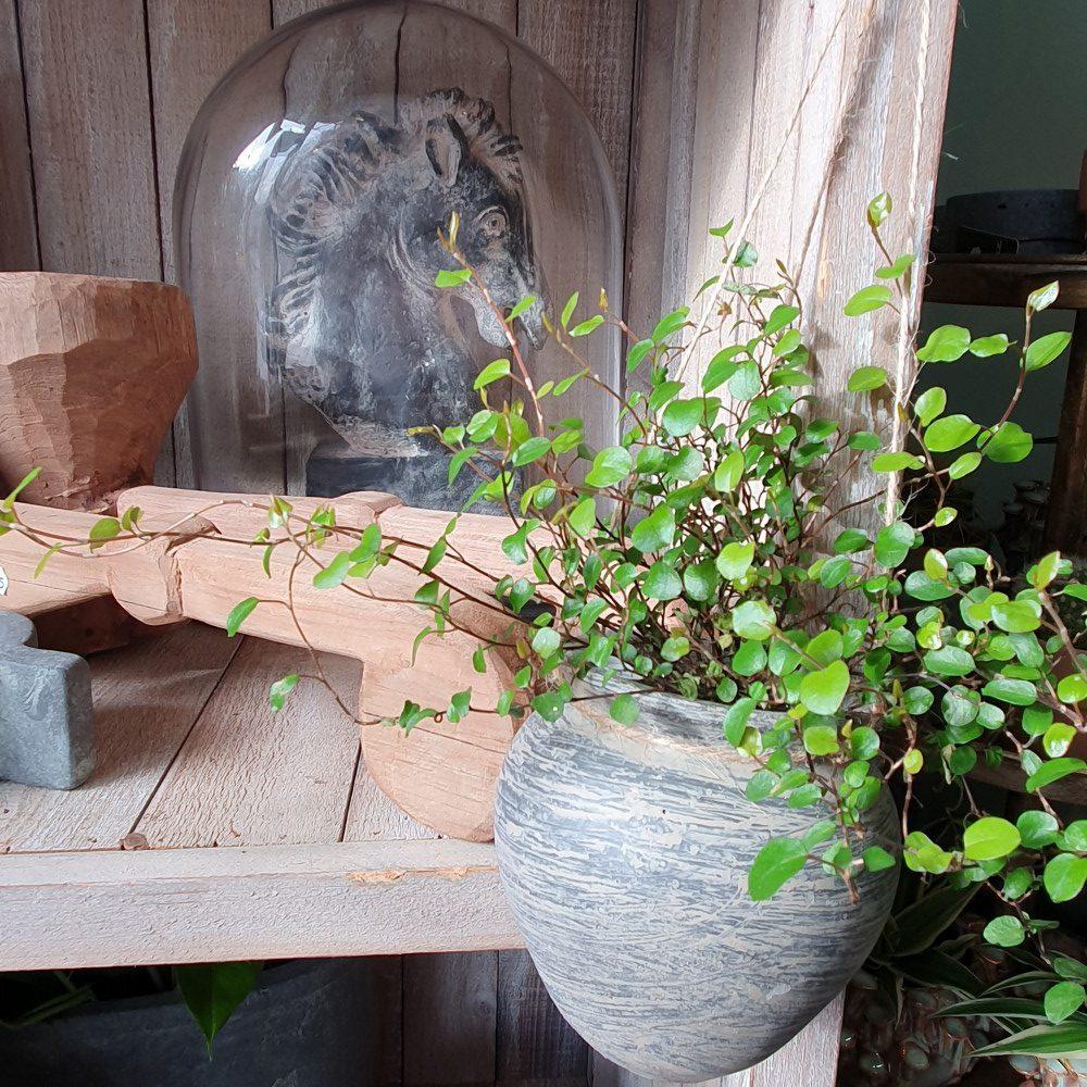 Planten die passen binnen een landelijke stijl interieur